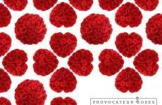 Provocateur Roses