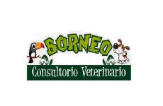 Mascotas Borneo