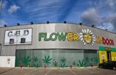 FLOWER INDOOR
