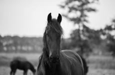 Horse Nexus Coaching