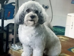 Solycann Peluquería Canina